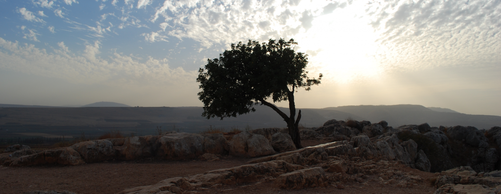 God's Sheep Hear His Voice - Tree in Israel