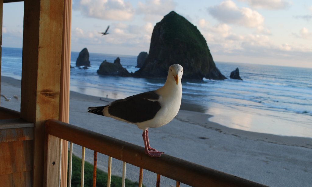 Prayer and Supplication with Thanksgiving - Seagull, Cannon Beach, Oregon