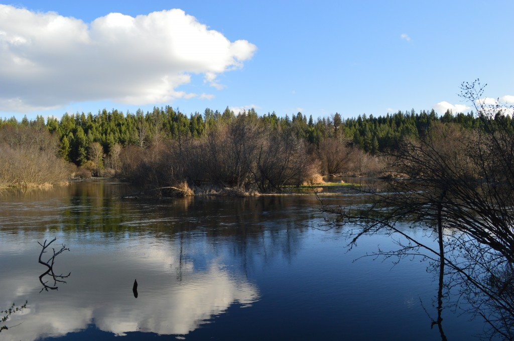 Little Spokane River - Reflections