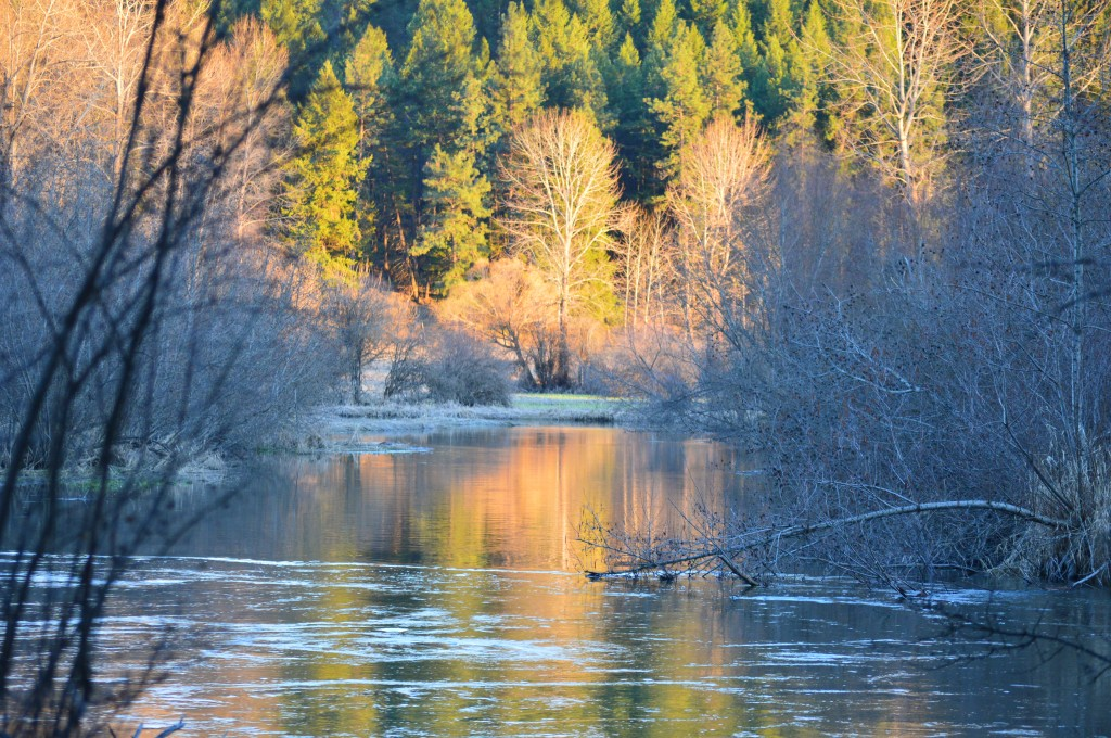 Little Spokane River and Reflections