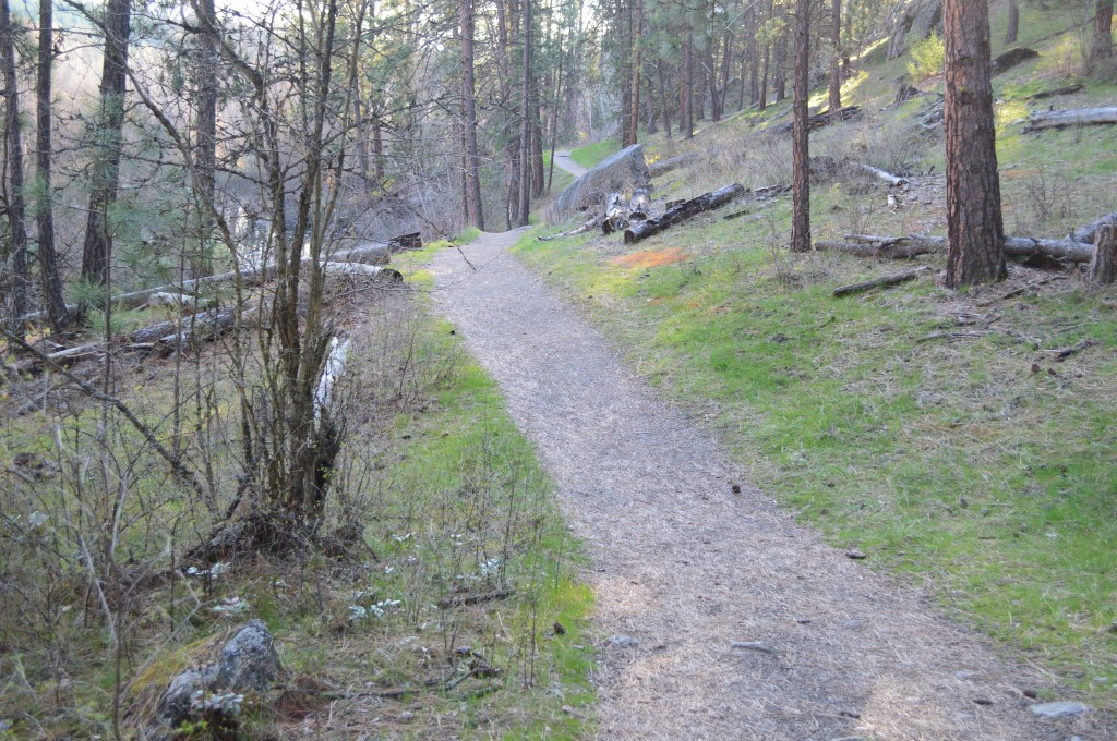 Trail near Little Spokane River