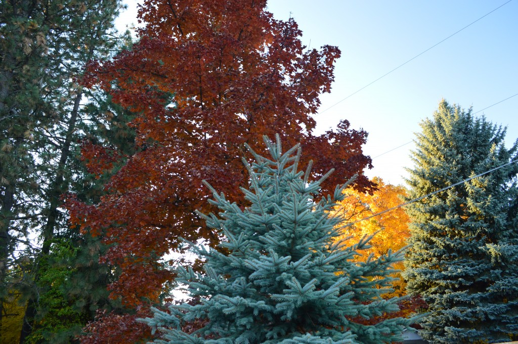 Tree Colors in Spokane