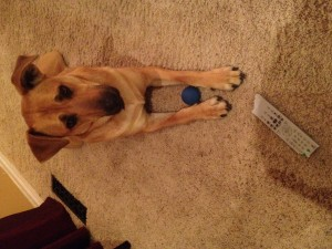 Dogs may think TV remotes are great food!